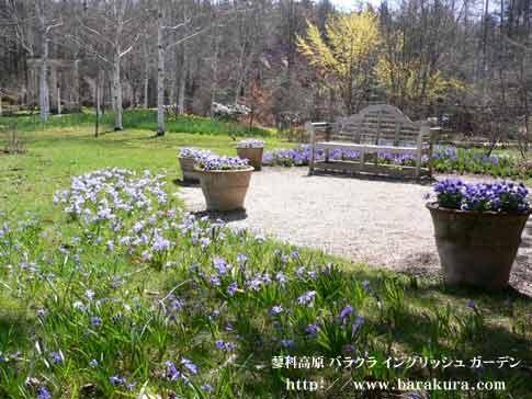 20060429d.jpg
