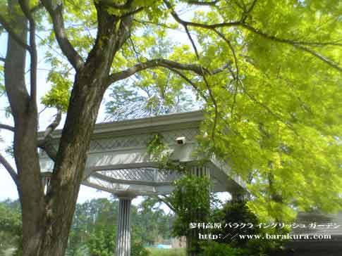 20060606d.jpg