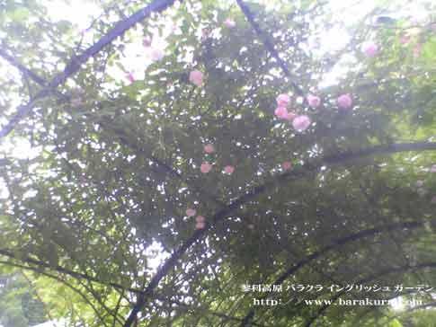 20060625g.jpg