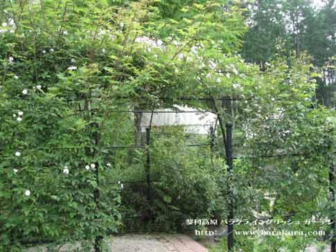 20060628d.jpg