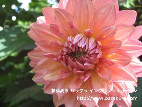 20060704g.jpg