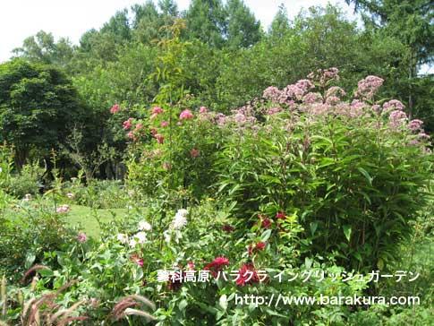 20060815b.jpg