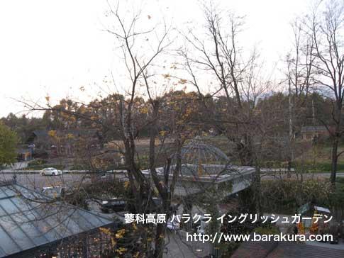 20061109a.jpg