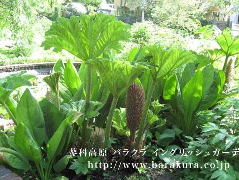 20070604p.jpg