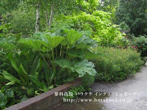 20070629_f.jpg